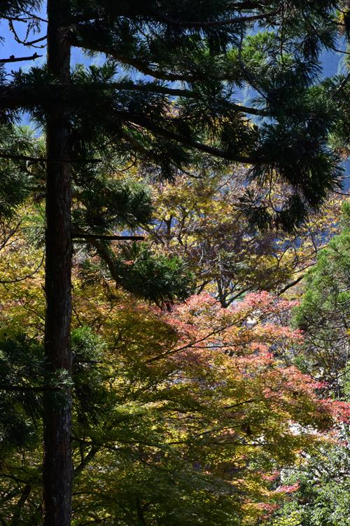 katsuragawa_16_11_7_1.jpg