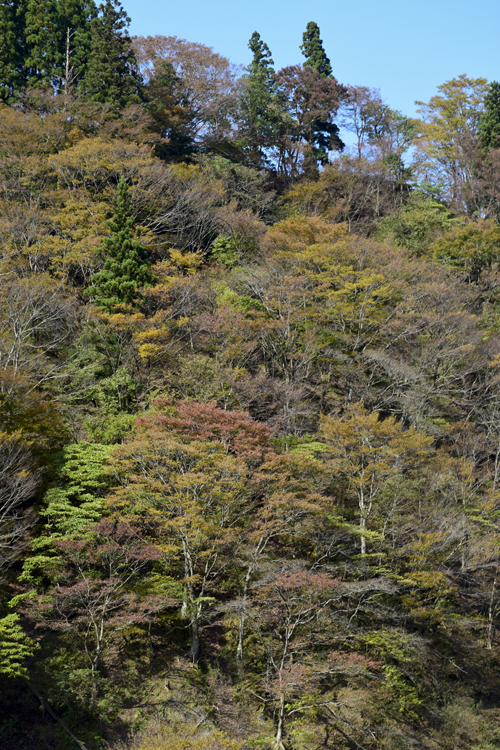 katsuragawa_16_11_7_7.jpg