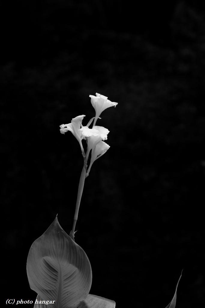 Iris 201607 02