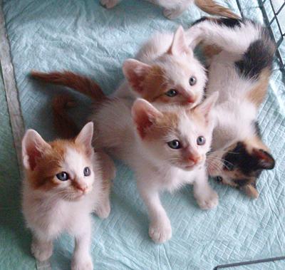 体調がよければ2ヶ月位の子猫姉弟も参加します。