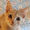bambi_p1_top1.jpg
