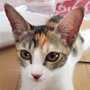 hikarii_p1_top1.jpg