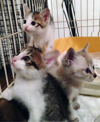 可愛い仔猫達が沢山参加します
