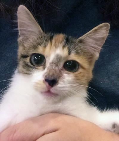 三毛猫ミワちゃん(3ヶ月半位 女の子)も参加します