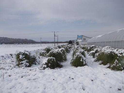 20161024_多めの積雪