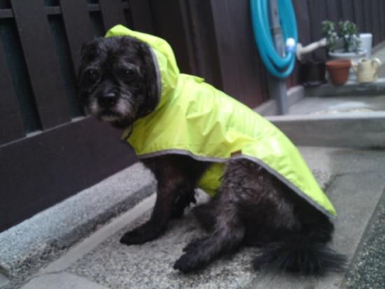 161005雨の夕さんぽ⑤