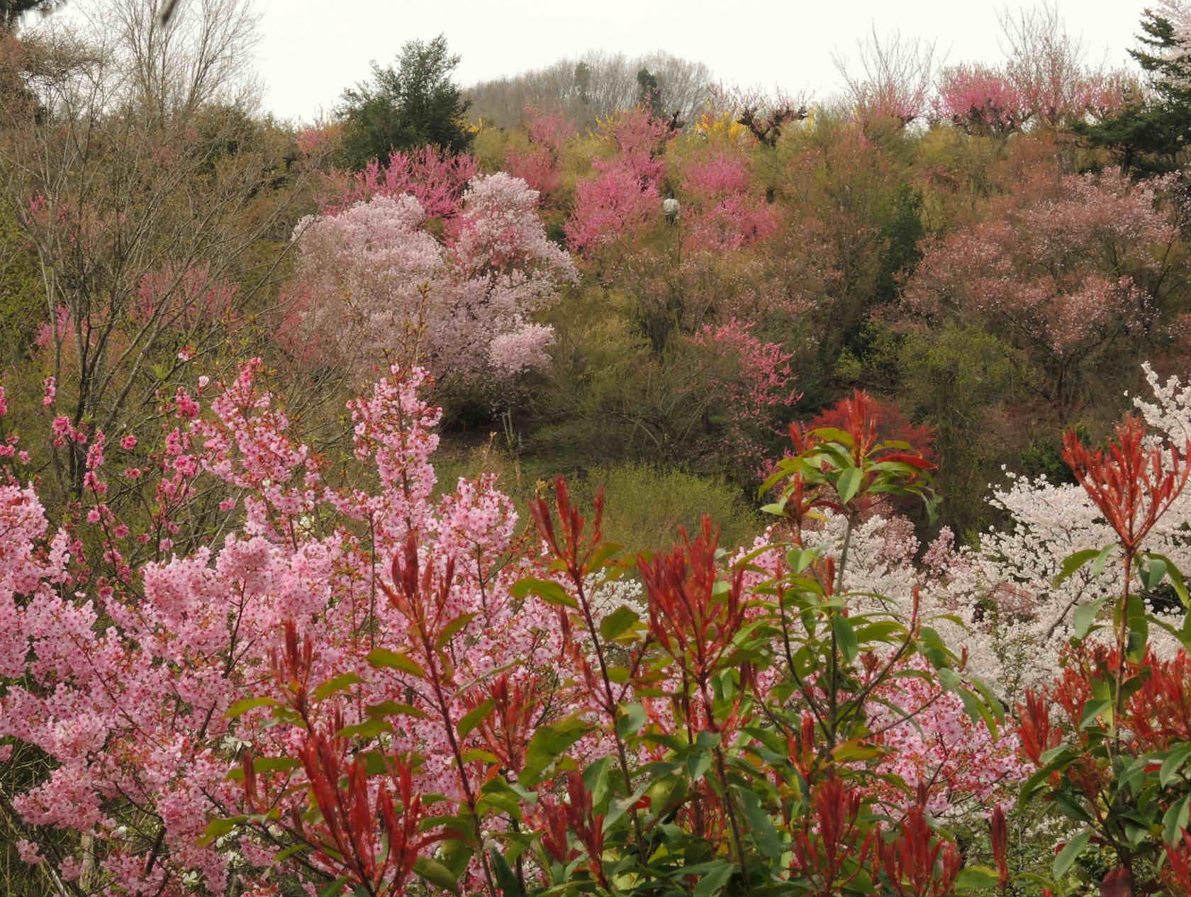 花の谷コース1