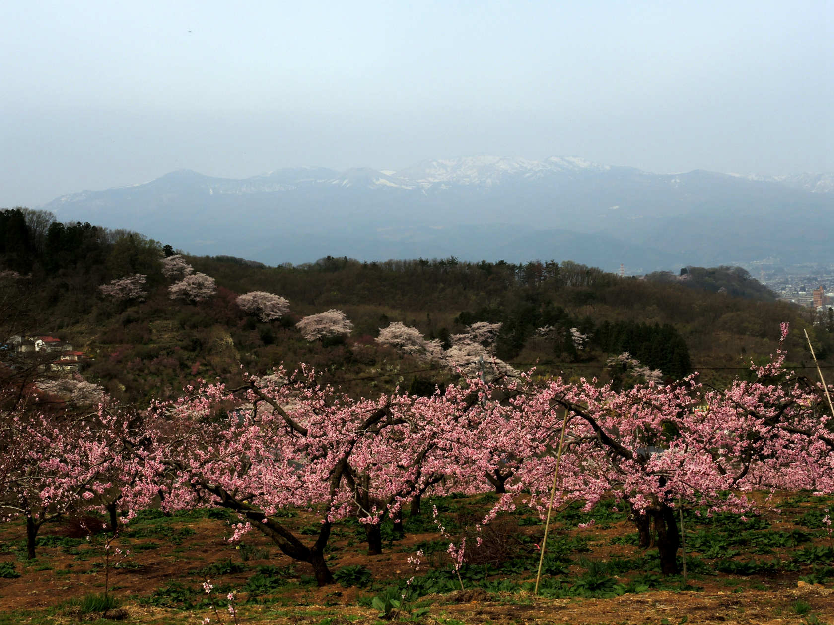 花の谷コースから吾妻連峰遠望