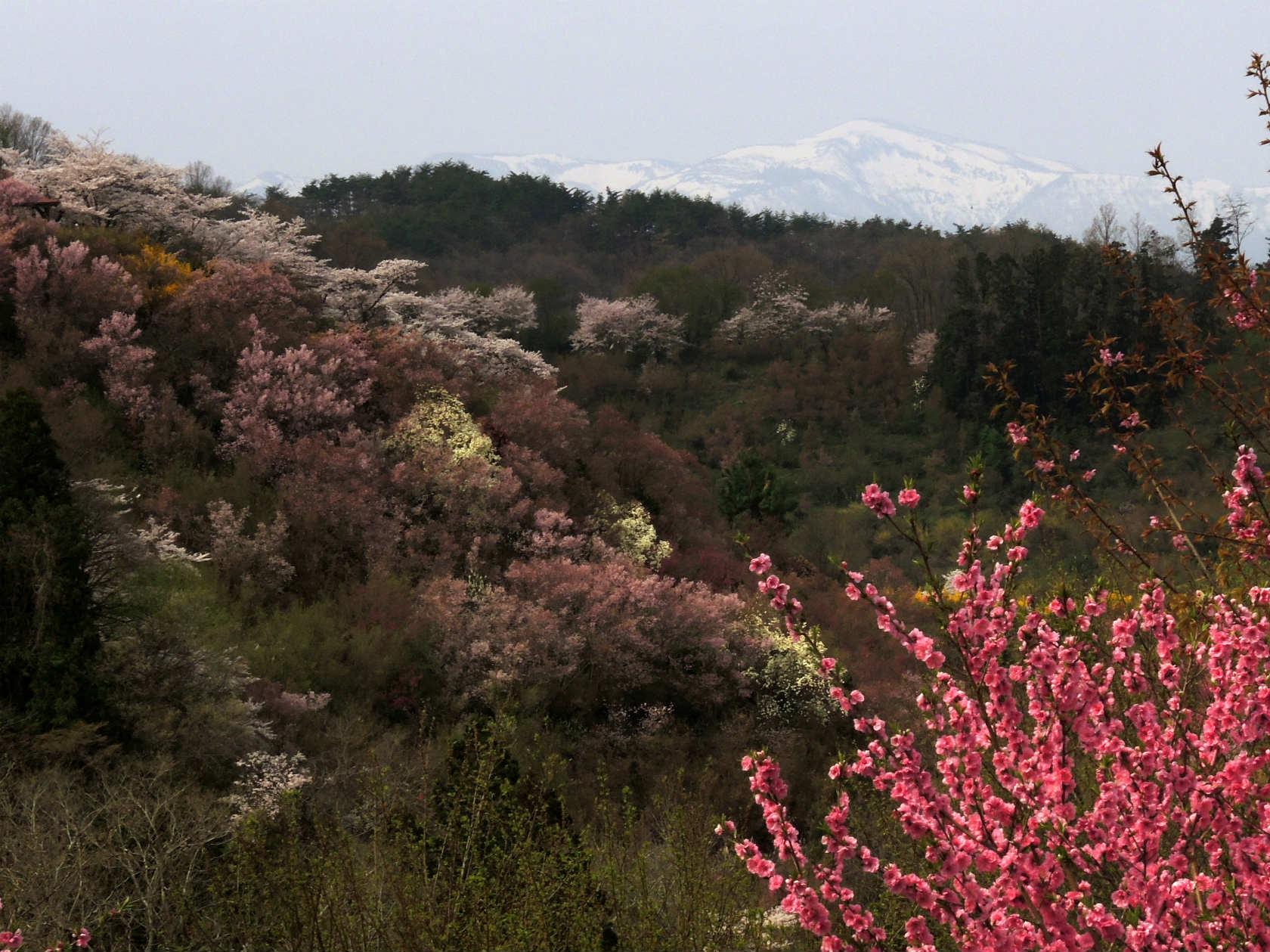 花の谷コースから吾妻連峰遠望2
