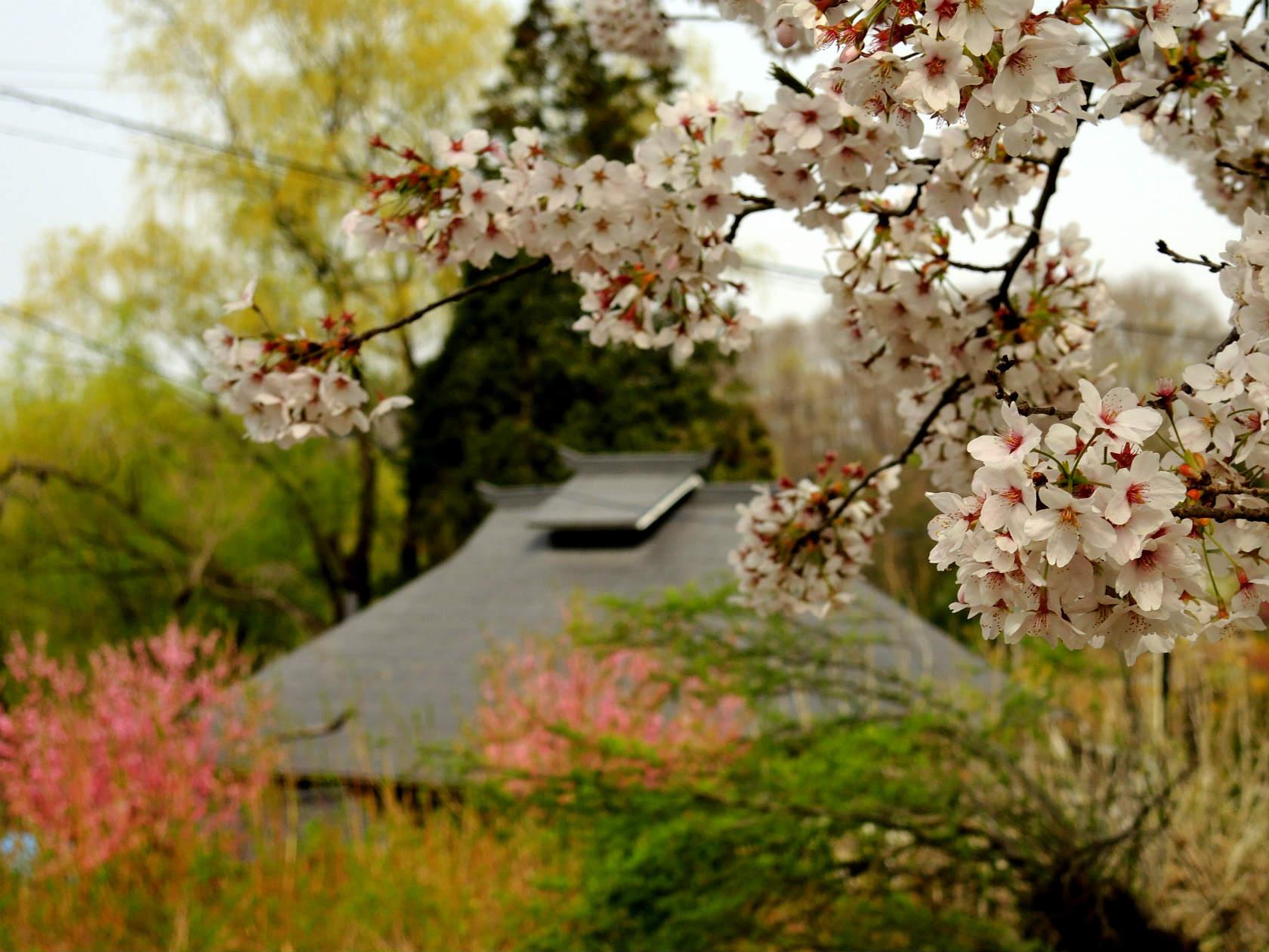 花の谷コースの茶屋1