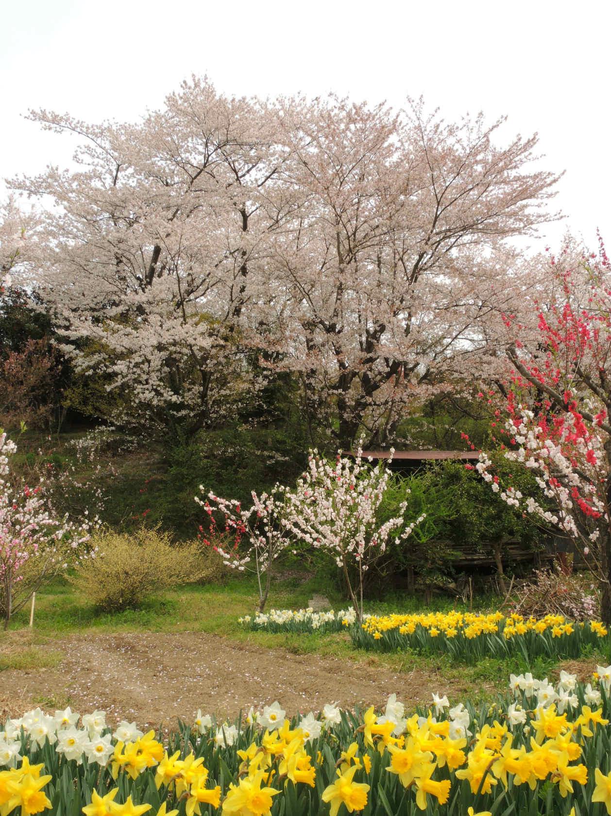 花見山公園周辺の集落4