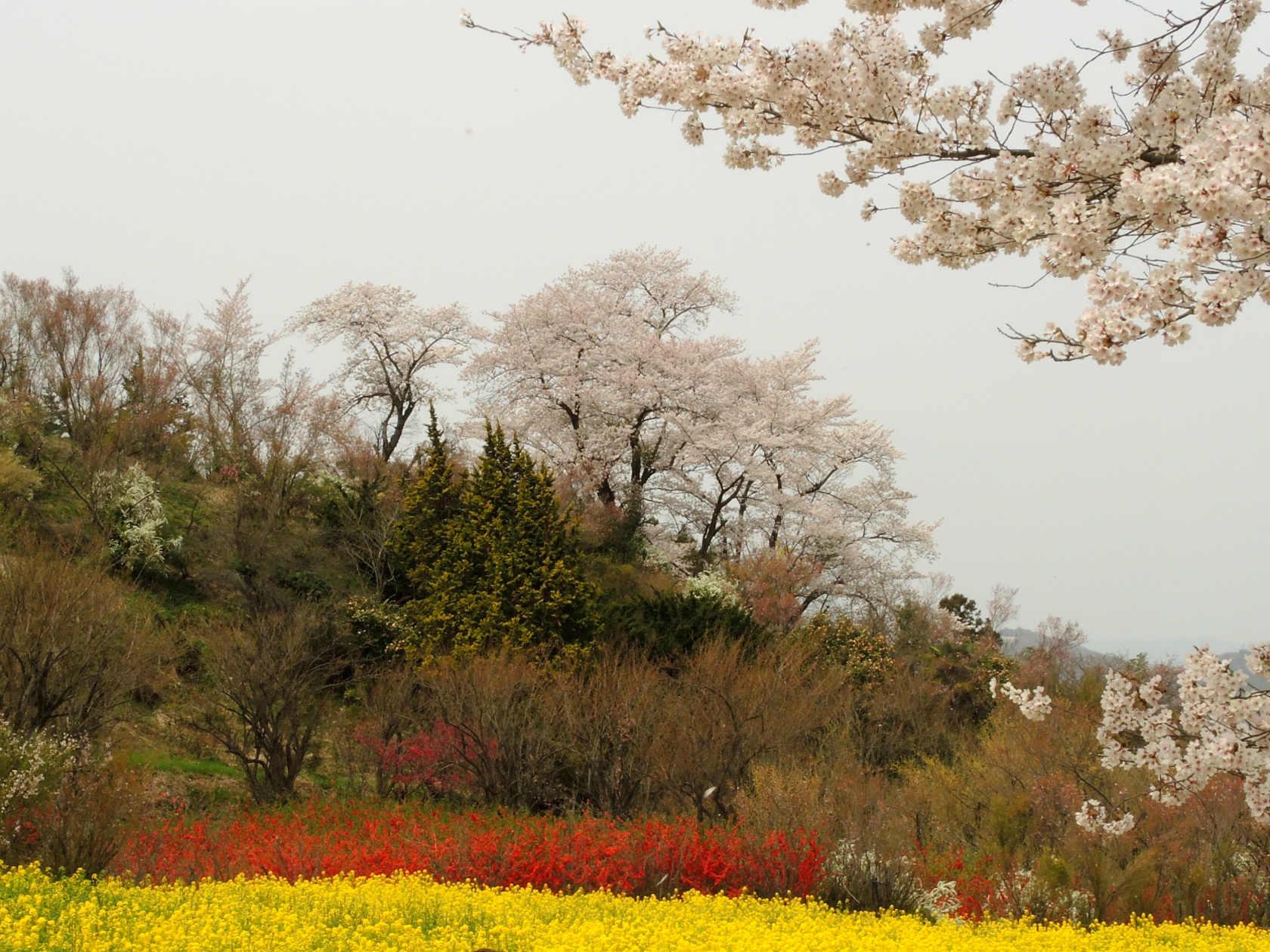 花見山公園周辺4