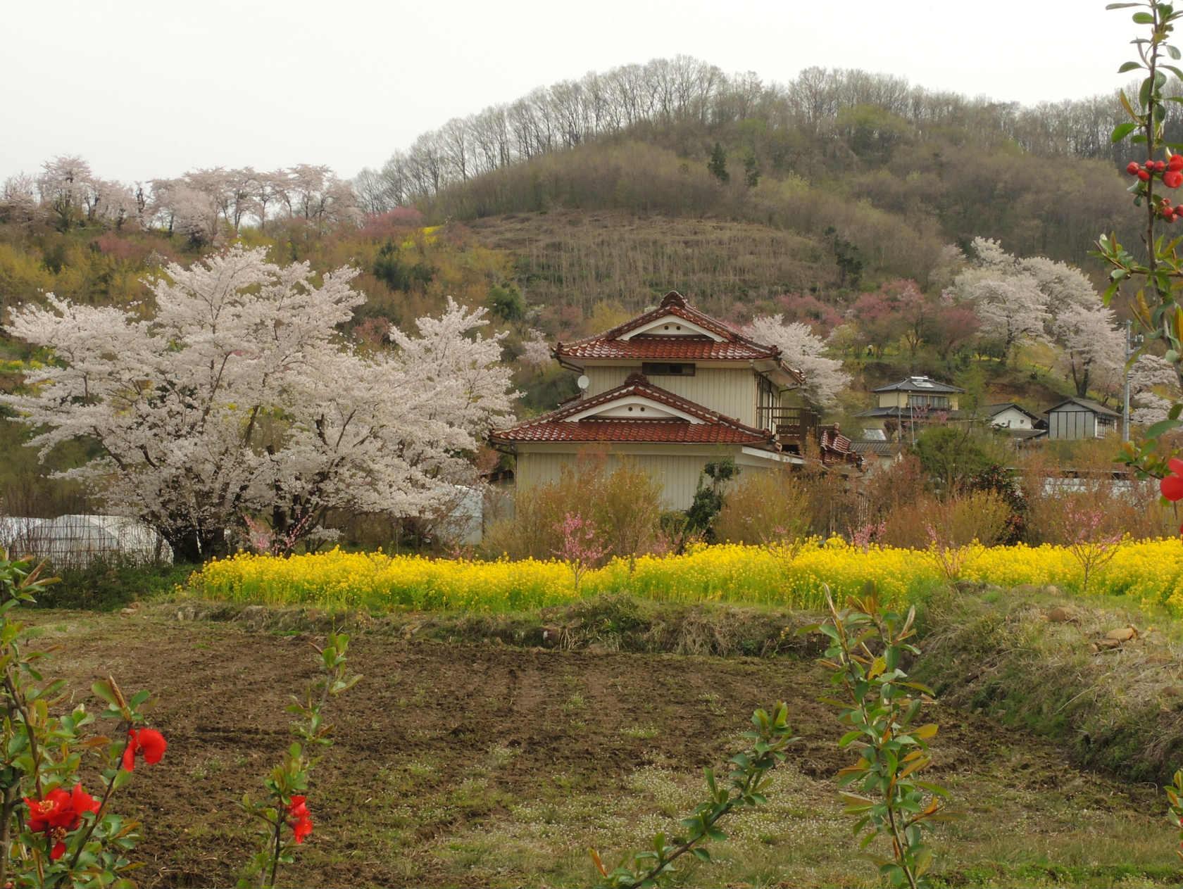 花見山公園周辺の集落1