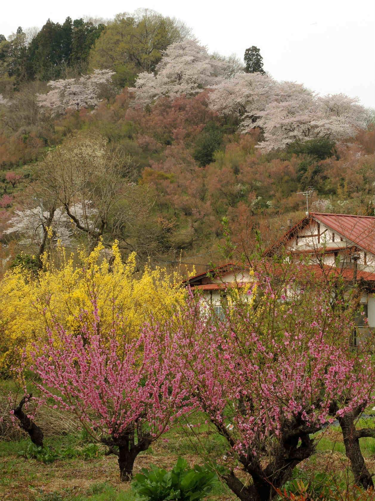 花見山公園周辺の集落2