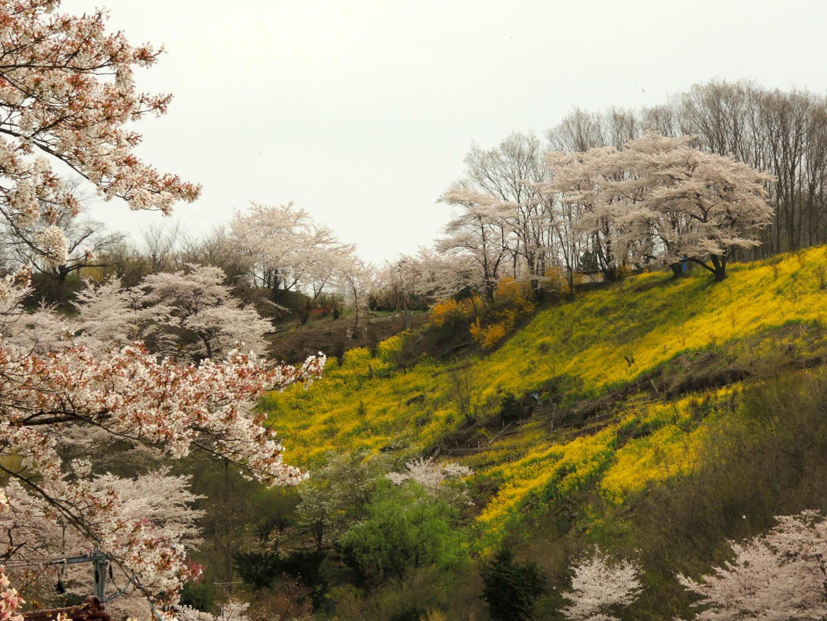 花見山公園周辺の集落3