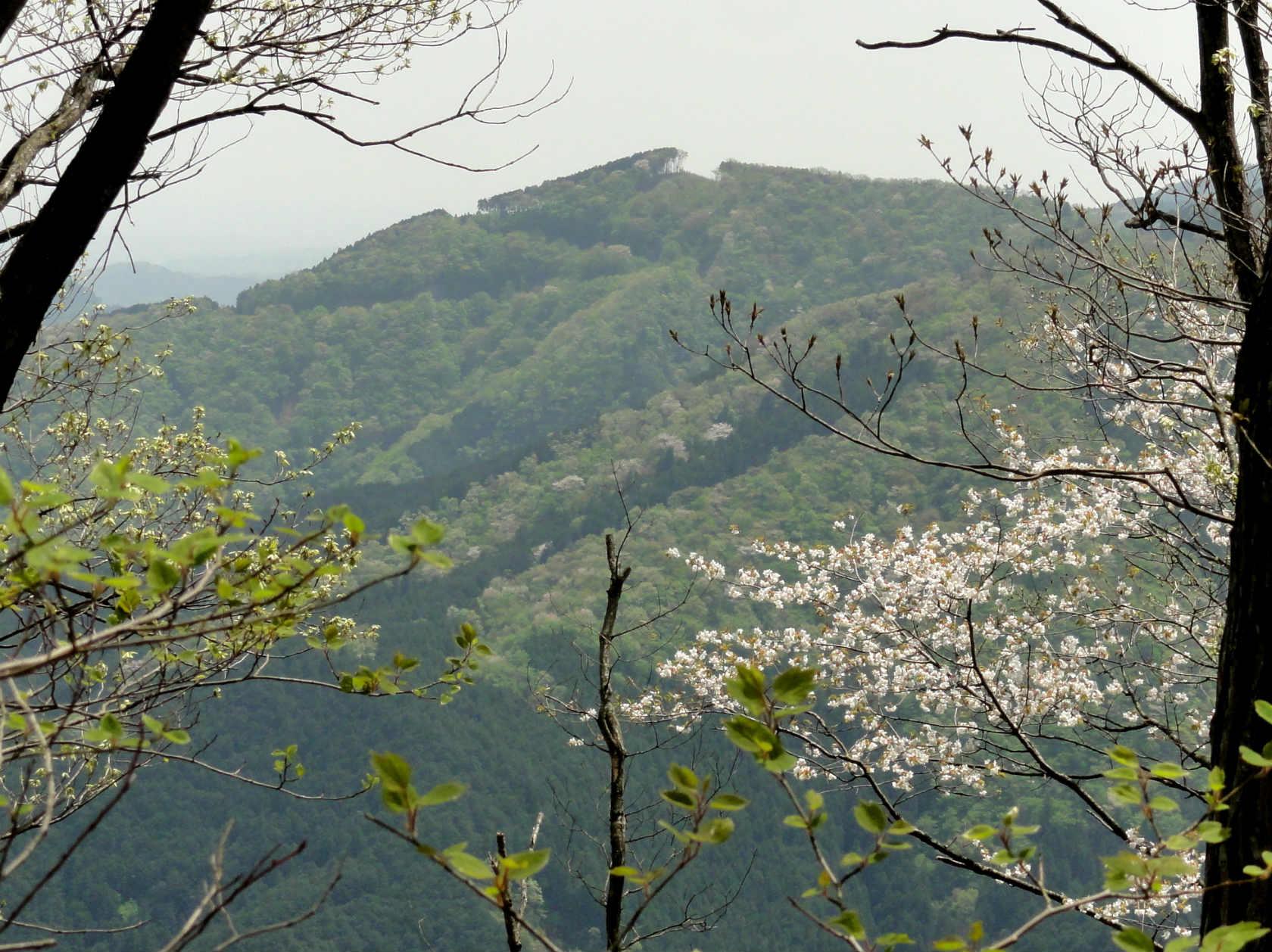 桜と山並み