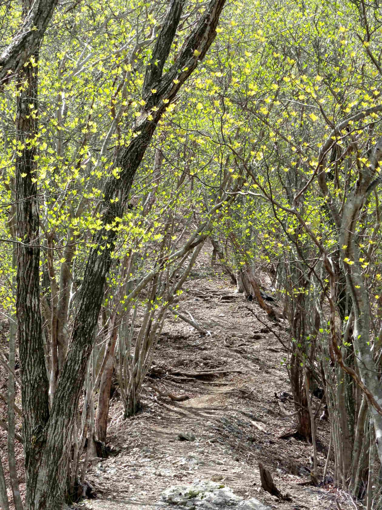 登山道の新緑