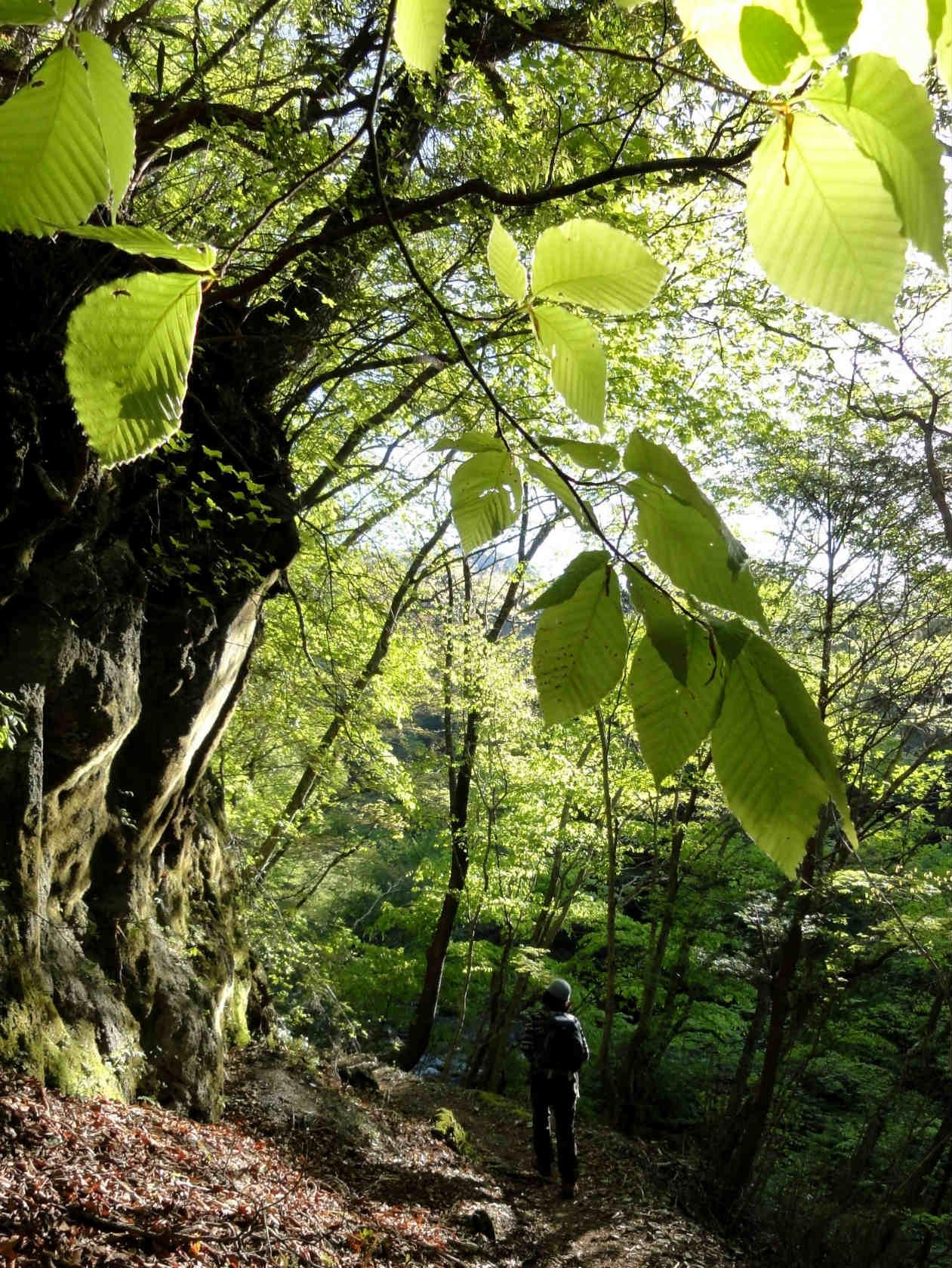新緑の登山道1