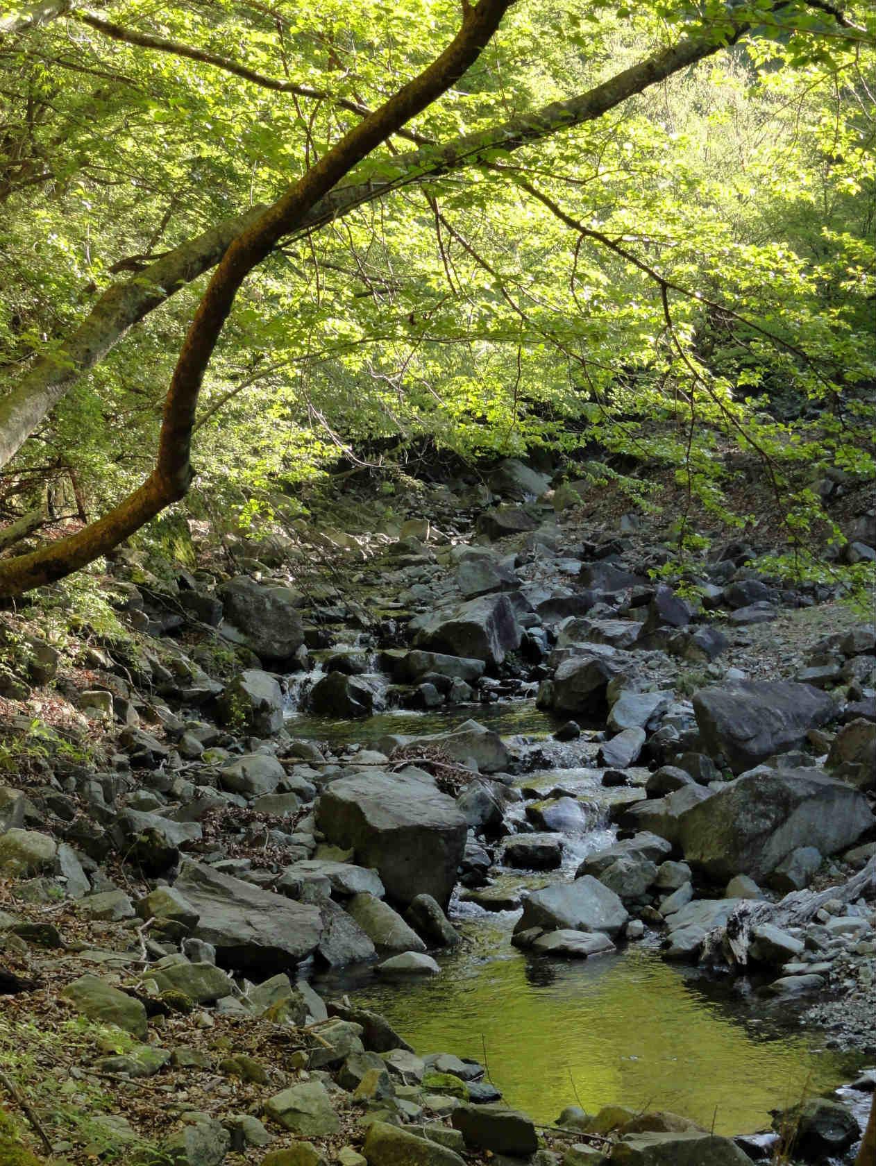 新緑の登山道2