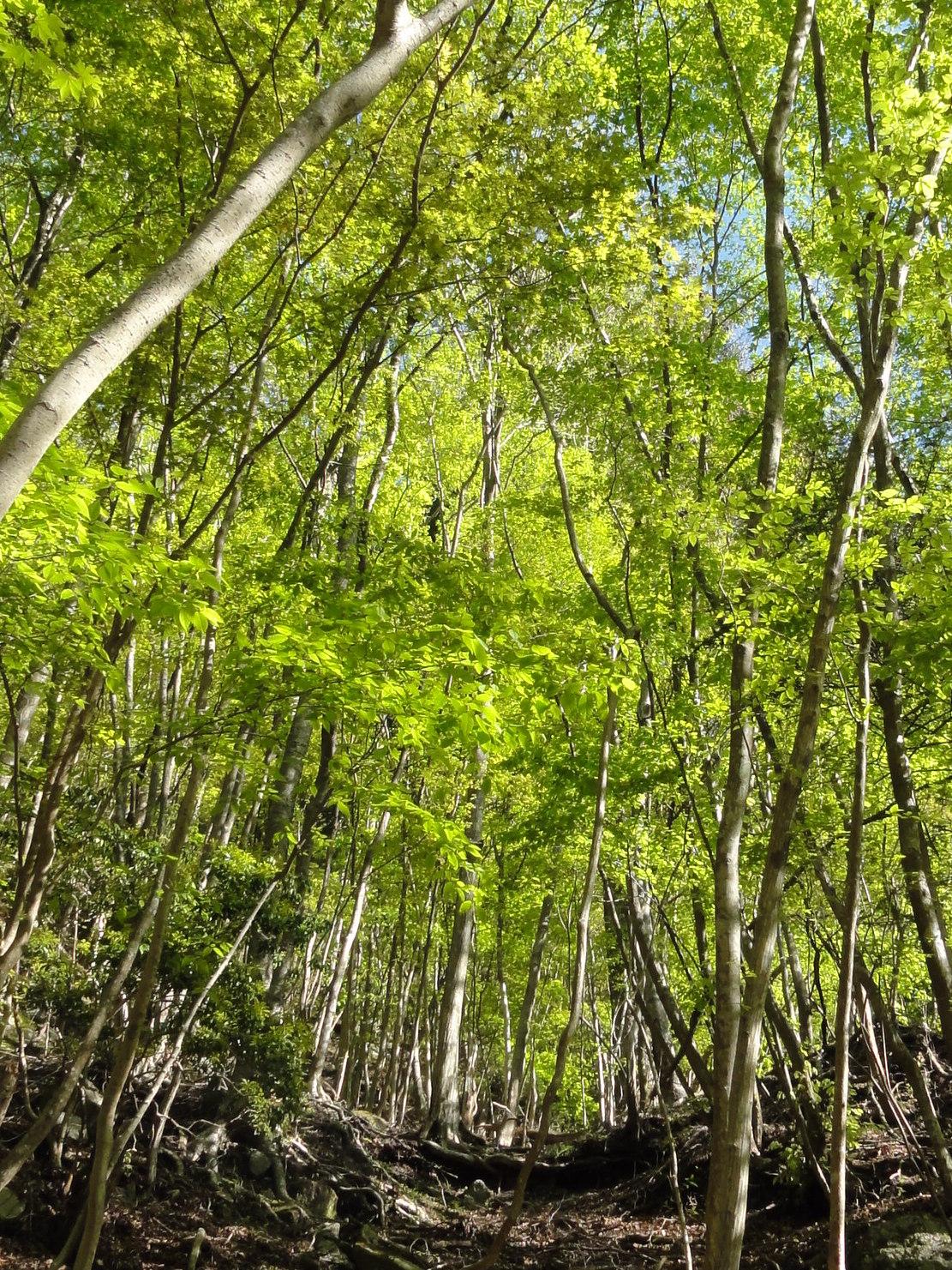 新緑の登山道3