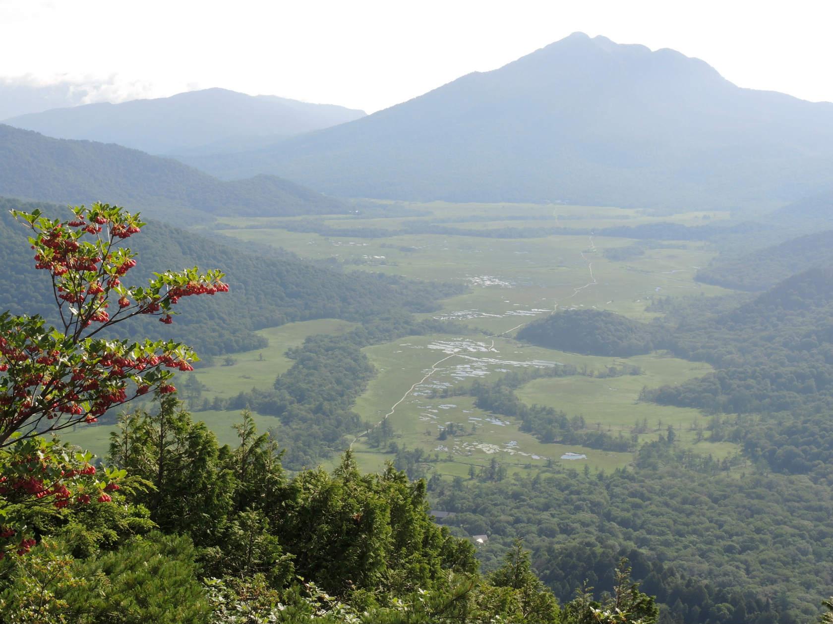 ウラジロヨウラクと燧ヶ岳