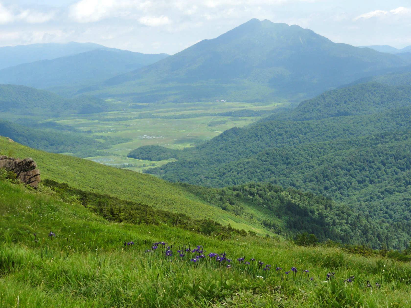 小至仏山を少し下った展望地からの燧ヶ岳手前にアヤメの小群落