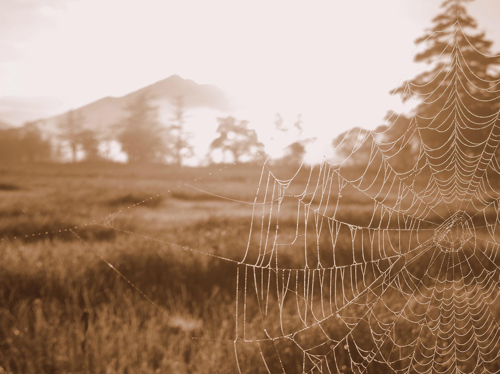 蜘蛛の巣越しの燧ヶ岳2