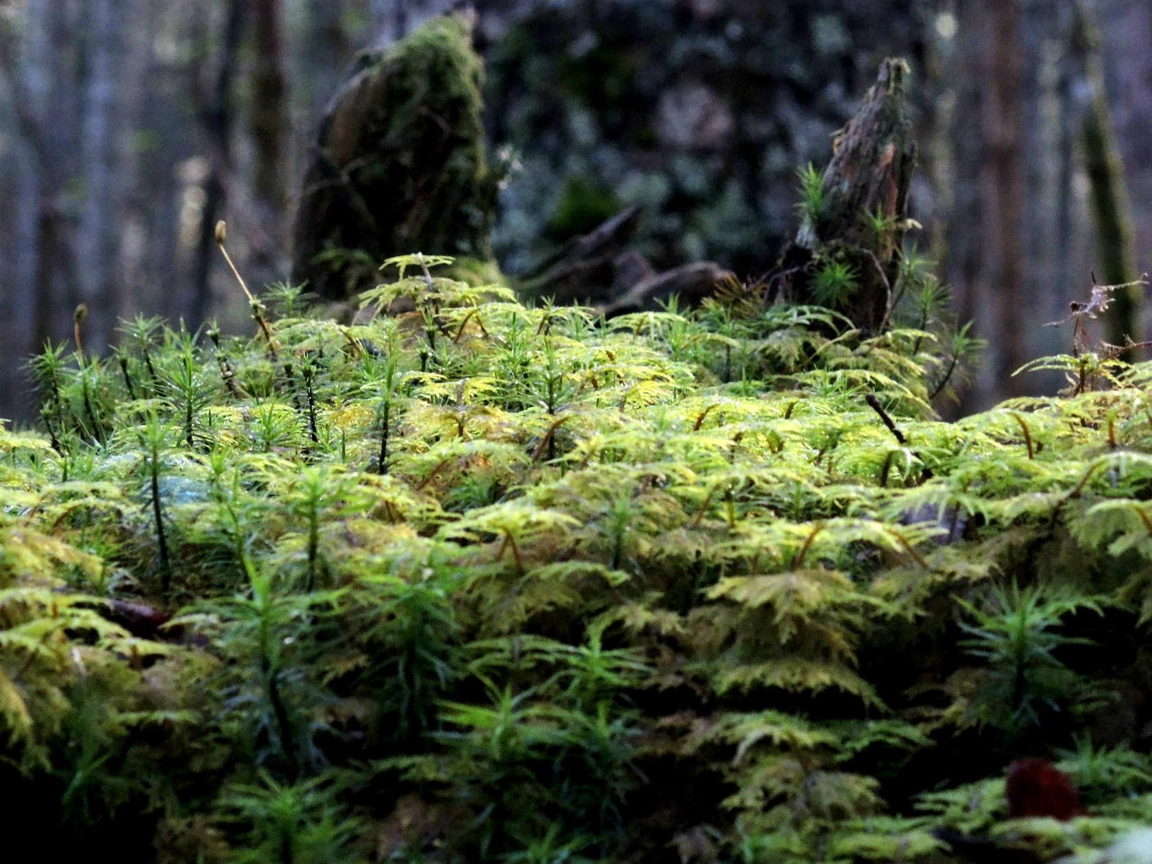 黒曜の森にて