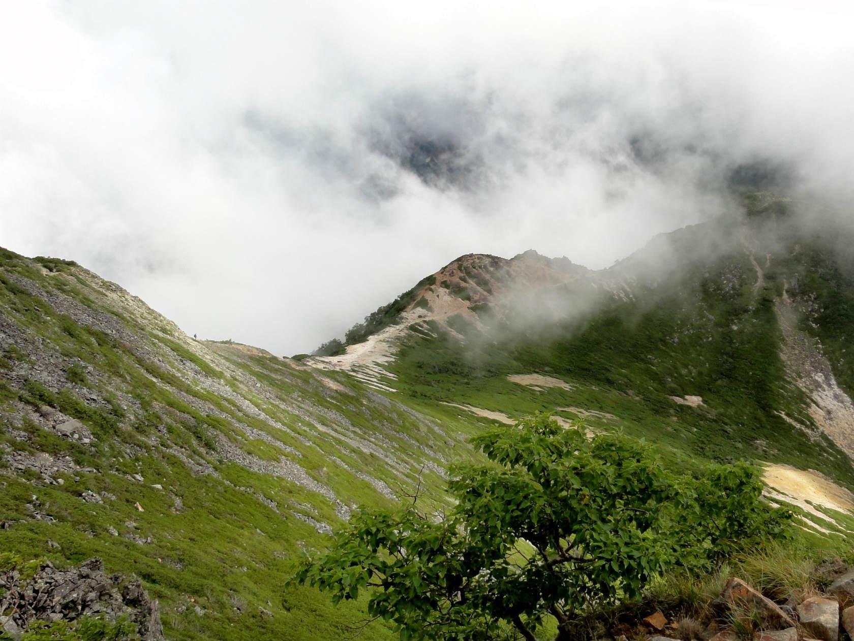 東天狗岳山頂から白砂新道を望む