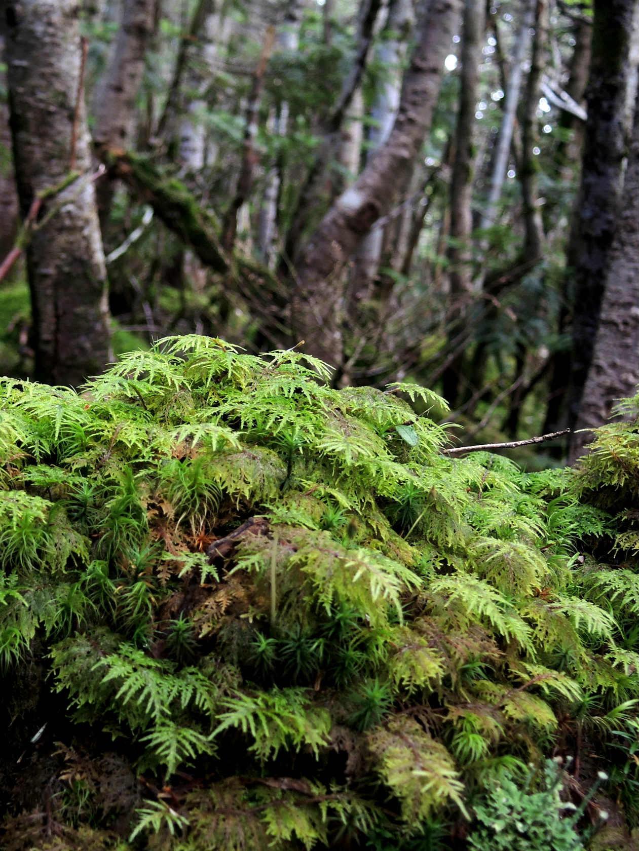 にゅうの森にて4