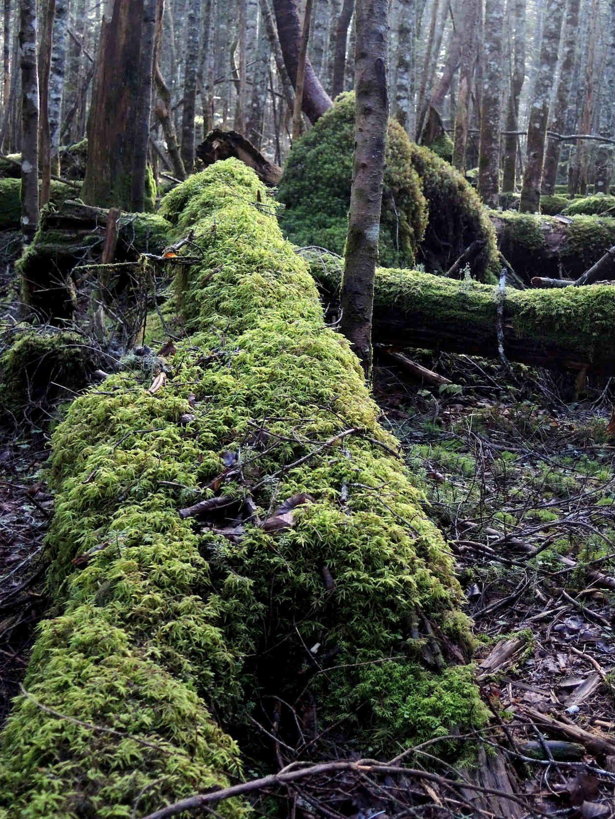 にゅうの森にて1