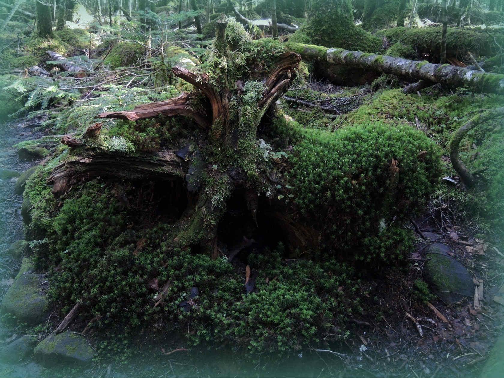 にゅうの森にて2