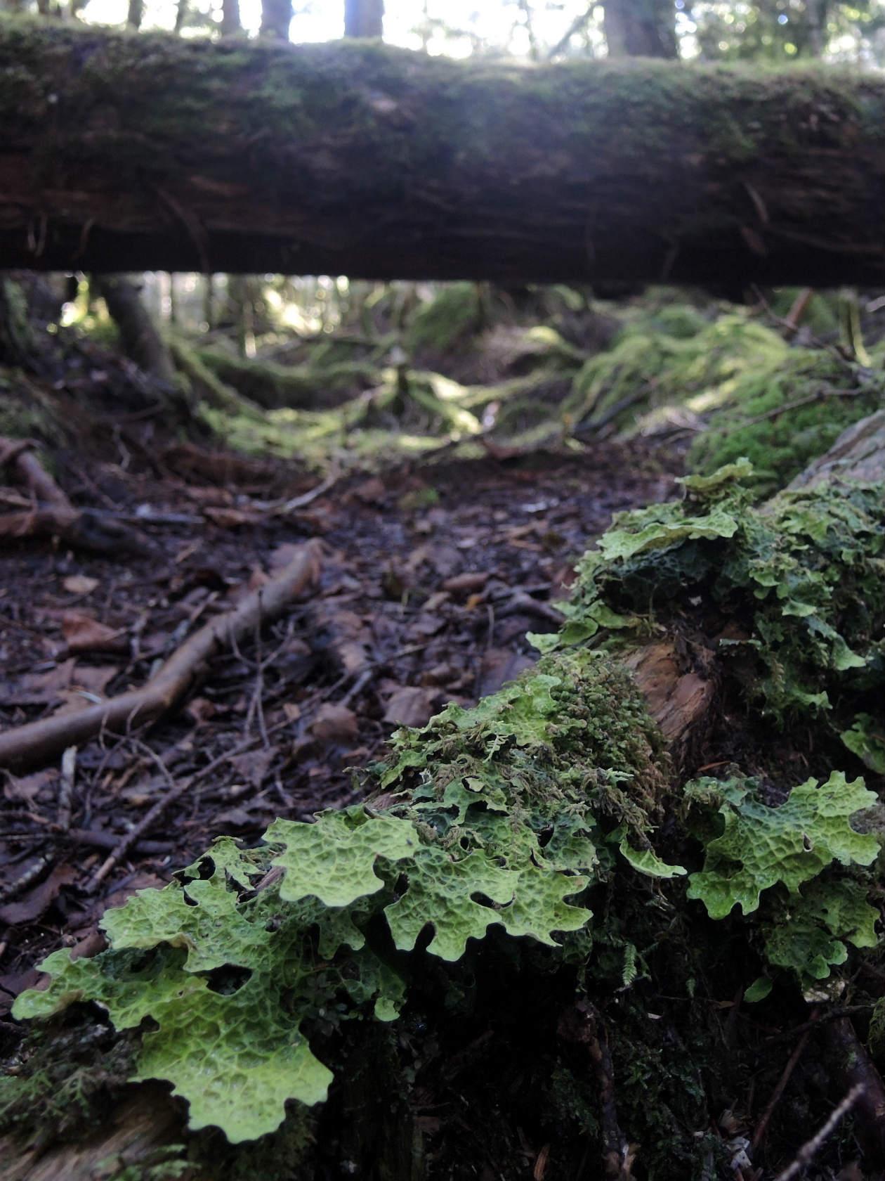にゅうの森にて3