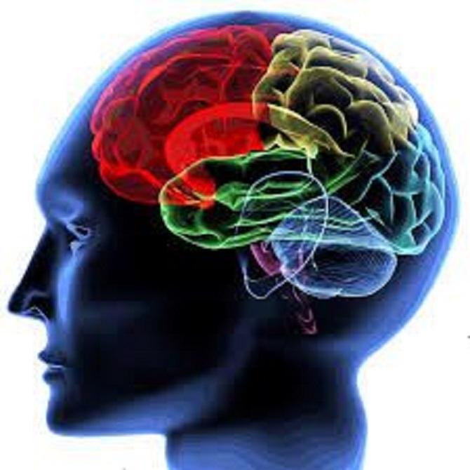脳萎縮・老化