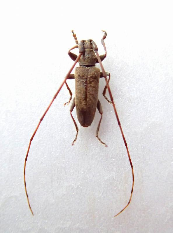 tusimanisebiroudo1898.jpg