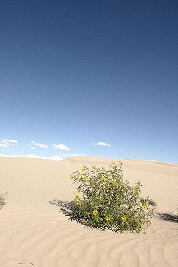 blog TAKE 100 Delta, 93N, Little Sahara, Dune, Sky & Plant 27648-8.9.07.jpg