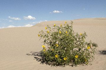 blog TAKE 100 Delta, 93N, Little Sahara, Dune, Sky & Plant 2_27649-8.9.07.jpg