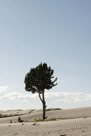 blog TAKE 100 Delta, 93N, Little Sahara, Dune, Tree & Sky 27696-8.9.07.jpg