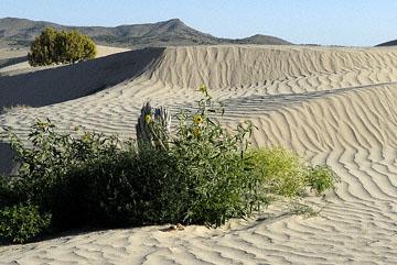 blog TAKE 100 Delta, 93N, Little Sahara, Dune, Sunflower & Sky 27695-8.9.07.jpg
