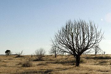blog TAKE 100 Delta, 93N, Little Sahara, Dune, Tree & Sky 27701-8.9.07.jpg
