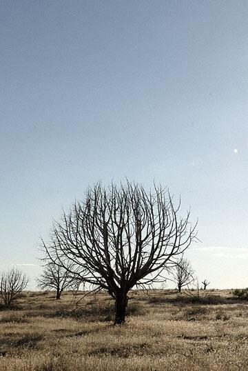 blog TAKE 100 Delta, 93N, Little Sahara, Dune, Tree & Sky 27697-8.9.07.jpg