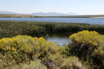 blog 24777 Comins Lake, Steptoe Valley, Ely, NV-8.10.07.jpg