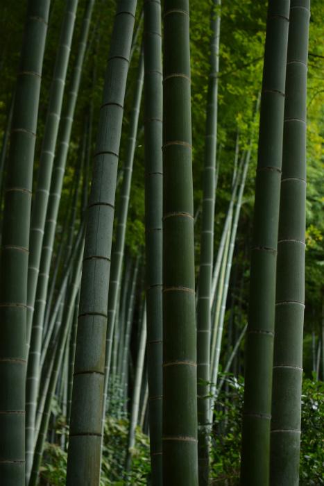 ブログ鎌倉9