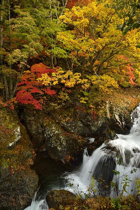 秋景流麗2