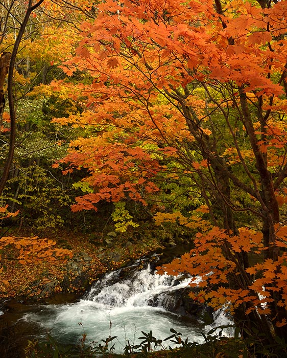 秋景流麗4