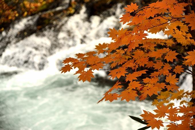 秋景流麗5