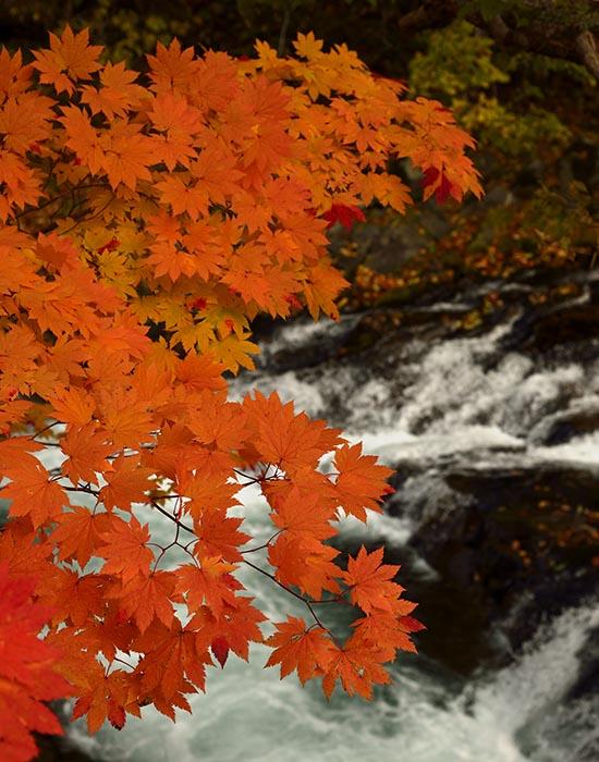 秋景流麗6