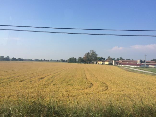 campo di riso1