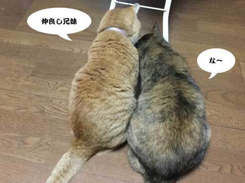 2016_11_04_2.jpg