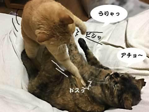 2016_11_07_4.jpg